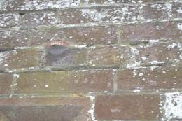 Teeth in hotel wall 1